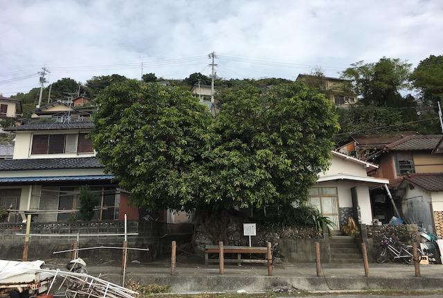 ハートの樹