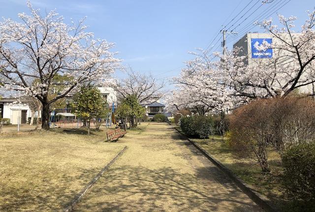 武蔵ヶ丘中央公園桜