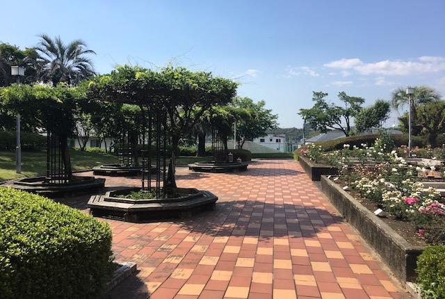 熊本県民総合運動公園バラ園