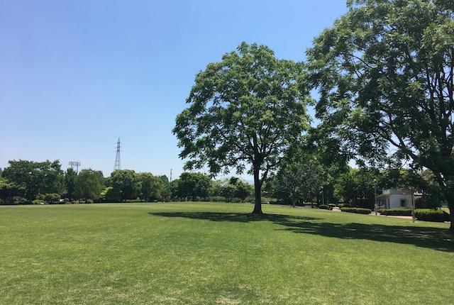 熊本県民総合運動公園芝生広場