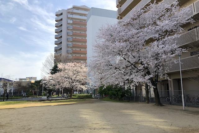 下油田公園桜