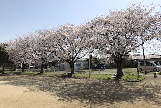 戸島下団四郎公園桜