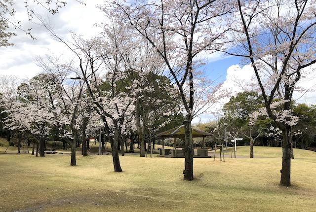 熊本県民総合運動公園ちびっこ広場桜