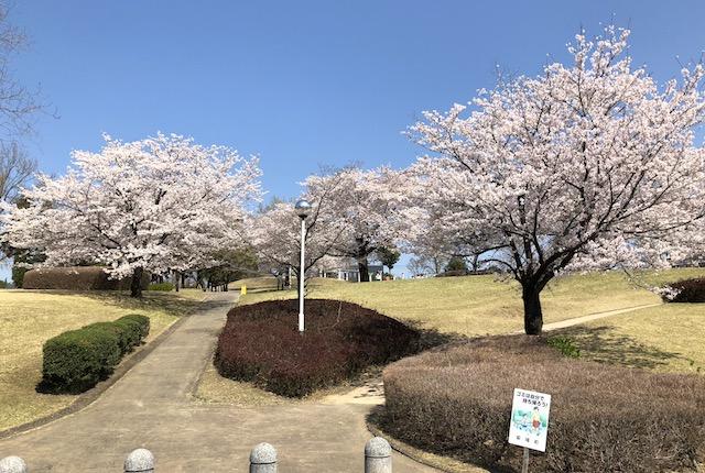 ふれあいの森公園桜