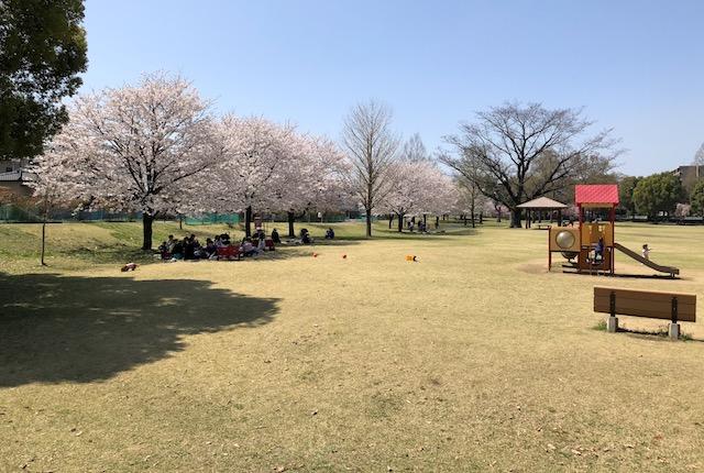 元気の森公園桜