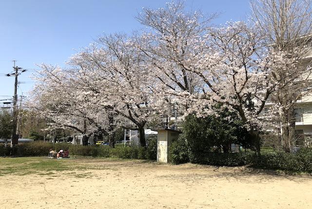 健軍東町公園桜