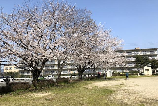 健軍小峯公園桜
