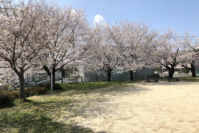 龍蛇平公園桜