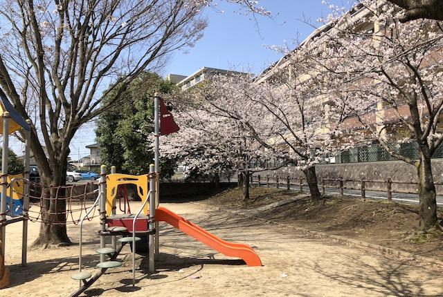 佐土原公園桜