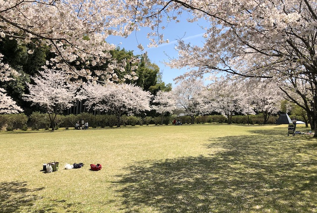 竹迫城跡公園花見