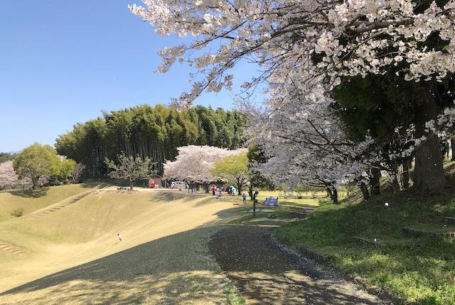 竹迫城跡公園桜