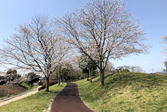 秋津三丁目公園桜