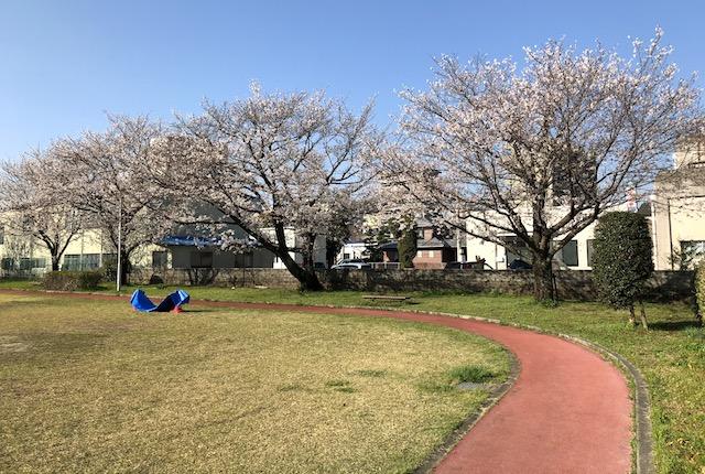 八王寺公園桜