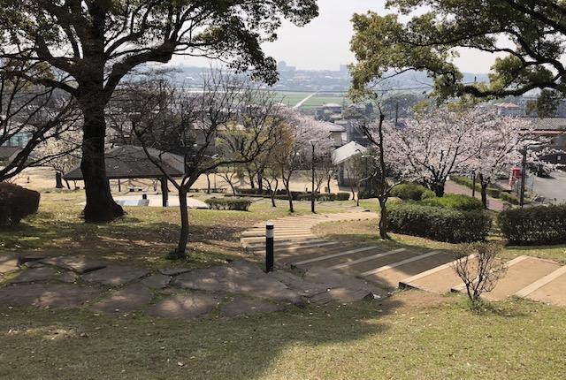 武蔵塚公園桜