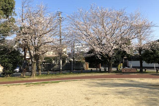 菅原公園桜