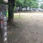 サクラ公園
