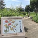 すずかけ公園