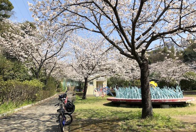 池田一丁目西児童遊園桜