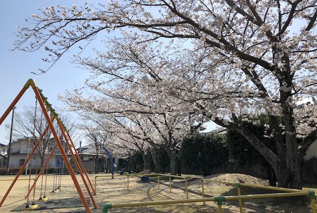 上宅地公園桜