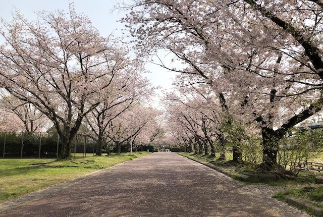 柿原公園桜