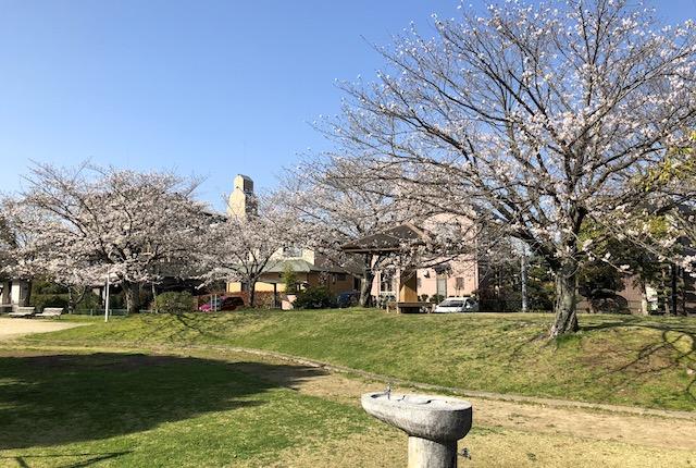長溝公園桜
