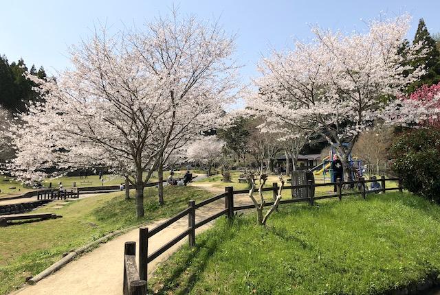 「小野泉水公園 桜」の画像検索結果