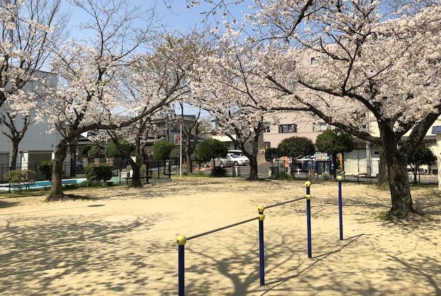 坪井一丁目公園桜