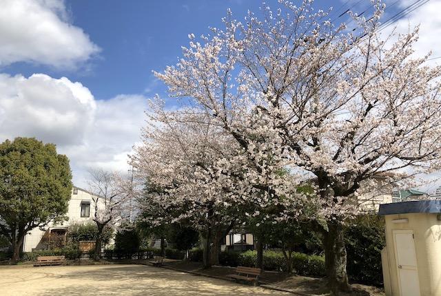 荒瀬公園桜