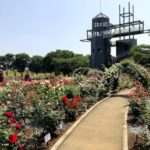 熊本県農業公園バラ園