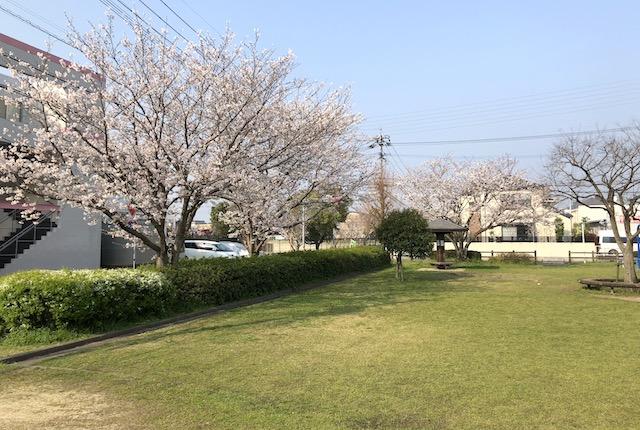 平成二丁目公園桜