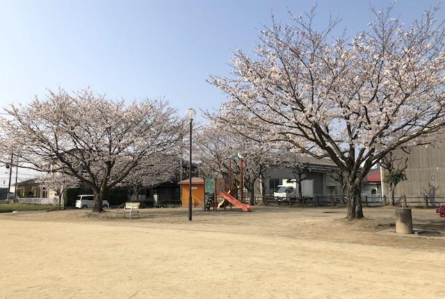 平田二丁目公園桜
