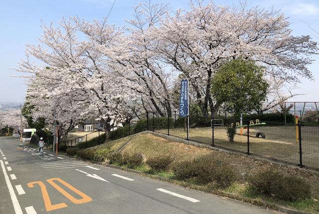 清水ヶ丘東公園桜坂