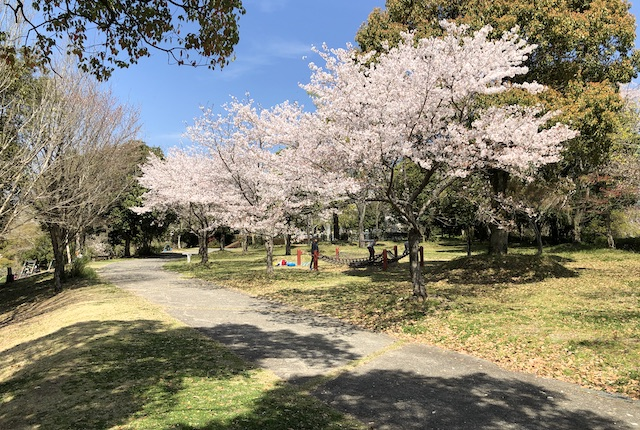 あんずの丘桜