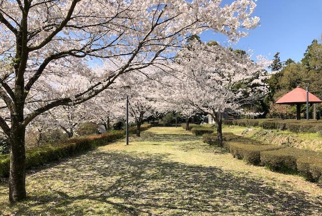 蛇ノ尾公園桜