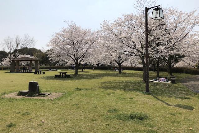 寂心緑地桜