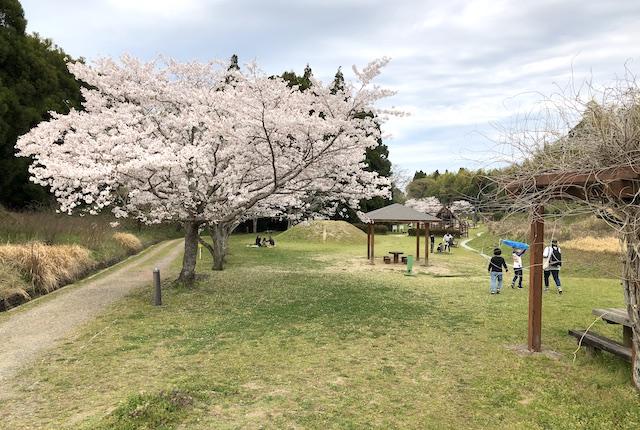 塚原古墳公園桜