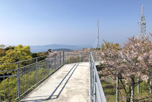 中尾山自然公園桜