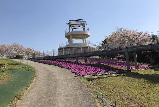 中尾山自然公園芝桜
