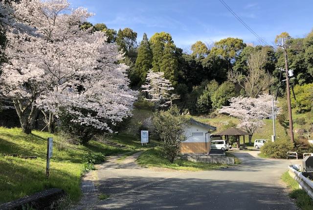 瑞厳寺公園桜