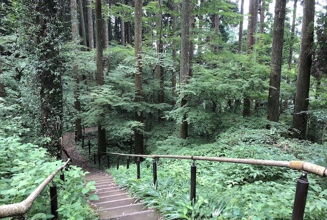 白糸の滝森林