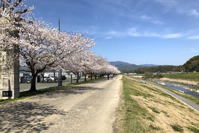 道の駅水辺プラザかもと桜並木