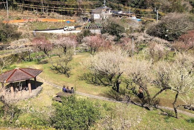 谷尾崎梅園