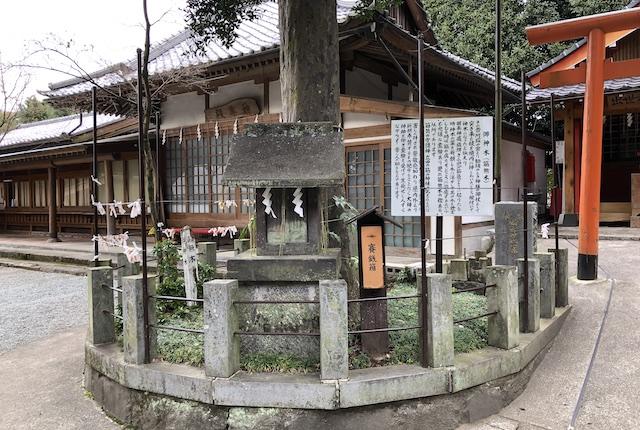 立田阿蘇三宮神社御神木
