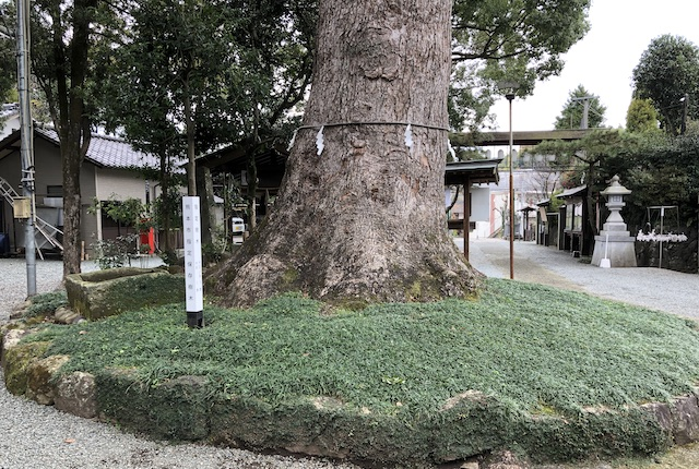 立田阿蘇三宮神社クスノキ