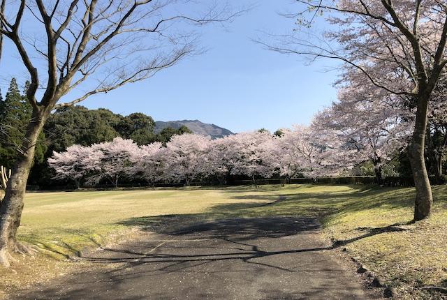 水上カントリーパークほいほい広場桜