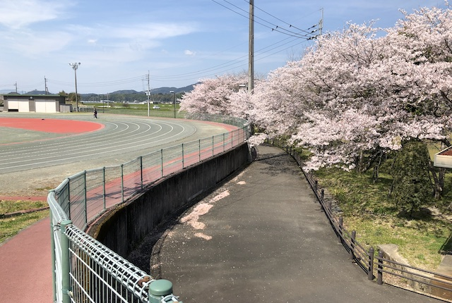 多良木町多目的総合グラウンド桜
