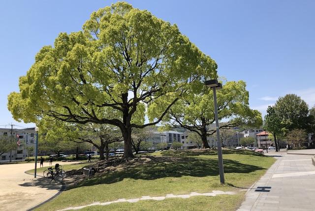 鹿児島アリーナ公園
