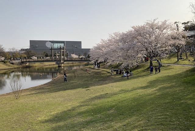 松江市北公園桜