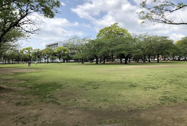 宮崎市中央公園市民芝生広場