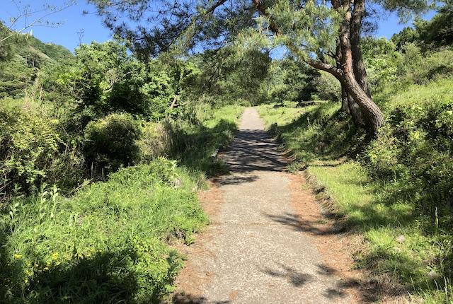 高森殿の杉坂道